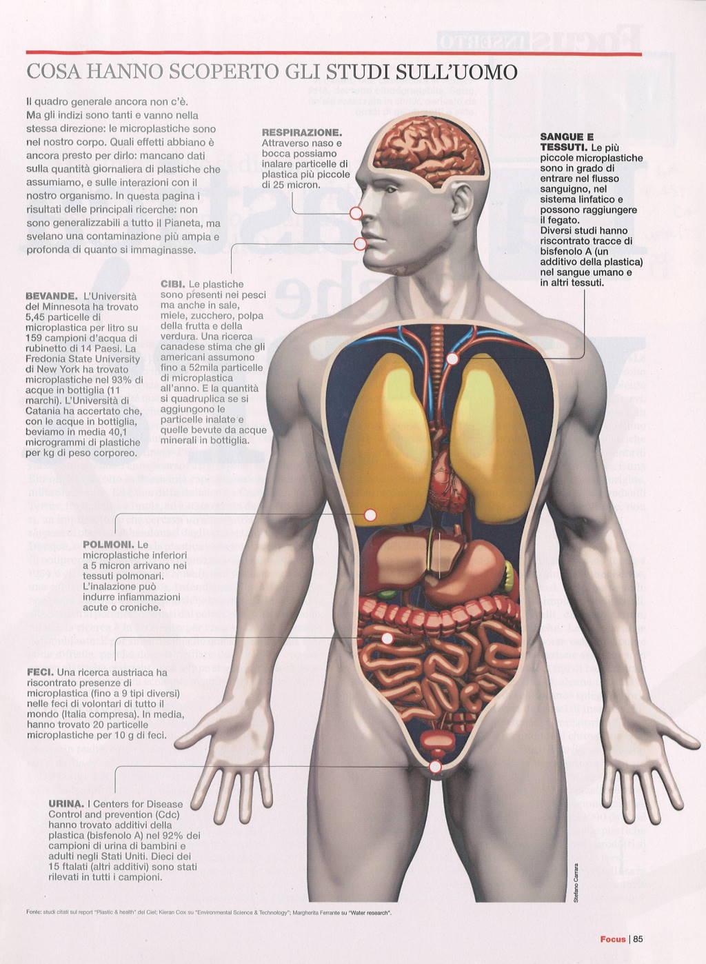 Microplastiche nel corpo umano 4